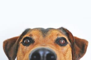 Read more about the article Make Your Garage Pet-Friendly