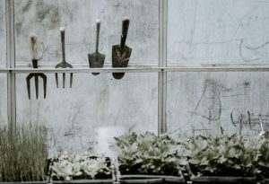 Read more about the article Turn Your Garage Into A Greenhouse